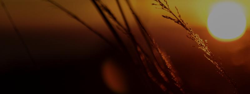 On-Demand Webinar: Demystifying SAP RISE with S/4HANA